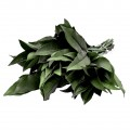 8300002051 - 8300002050 - (China) Osmanthus Leaves - Green.  Length 25-30cm.  Approx. 10 stems per Bunch