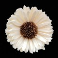 8300006054 (China) Sola Flower Natural - Gerbera Daisy Flower.  (8-8.5cmØ).  Pack of 5 pcs